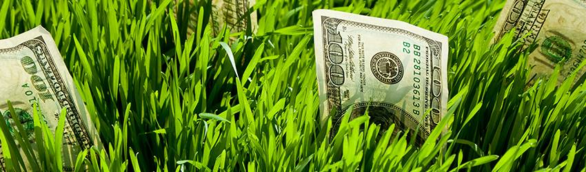 Money growing out of the ground.