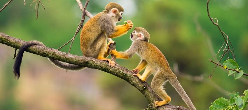 Think ahead and be creative in the year of the monkey. Collaborate with others that can help you succeed.
