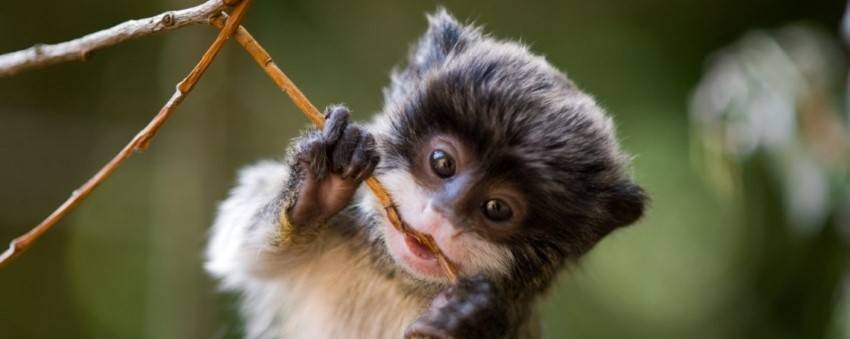 Being inventive in the year of the monkey breeds success. Hey, ya gotta eat!