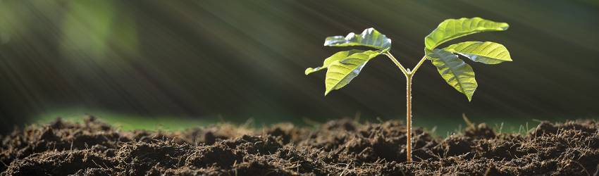 A plant grows out of the earth to represent an earth sign in their career growth.