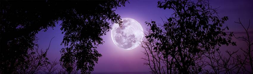 A Full Moon rests in a purple sky. There are dark trees in the foreground.