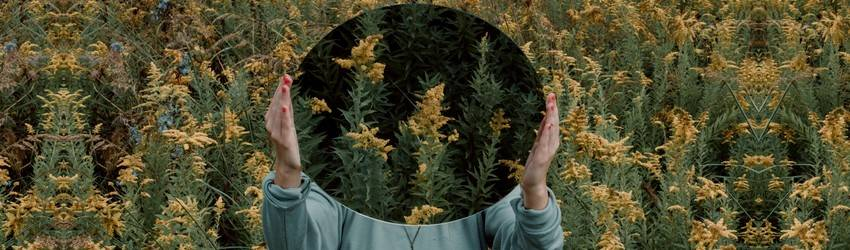 A person holding a mirror in front of their face in a flower field.