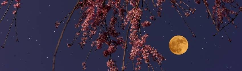 A Supermoon surrounded by pink branches.