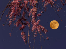 A Supermoon Horoscope for Your Chinese Zodiac Sign