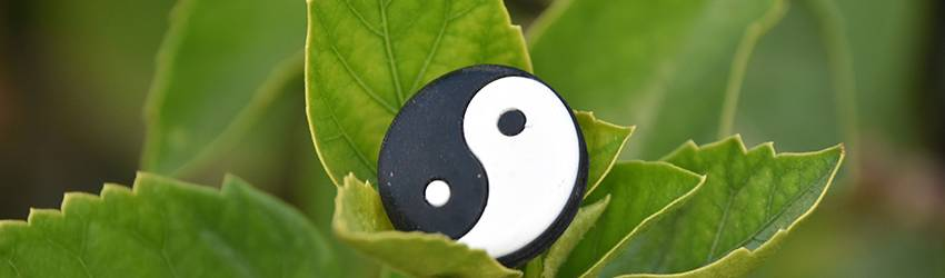 A yin and yang symbol sits in a plant.
