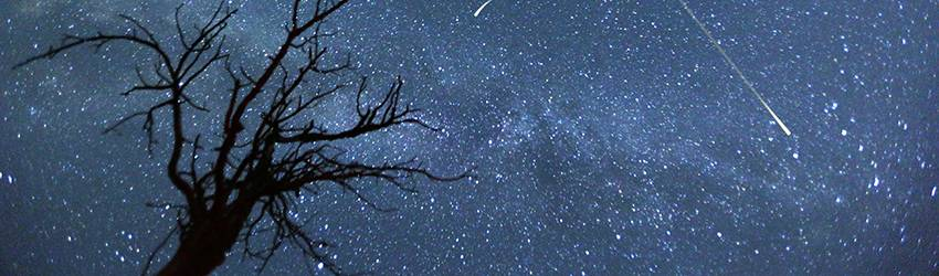 A sky filled with stars. A silhouetted dead tree can be seen in the foreground.